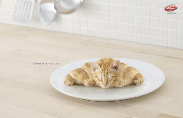 Croissant felino